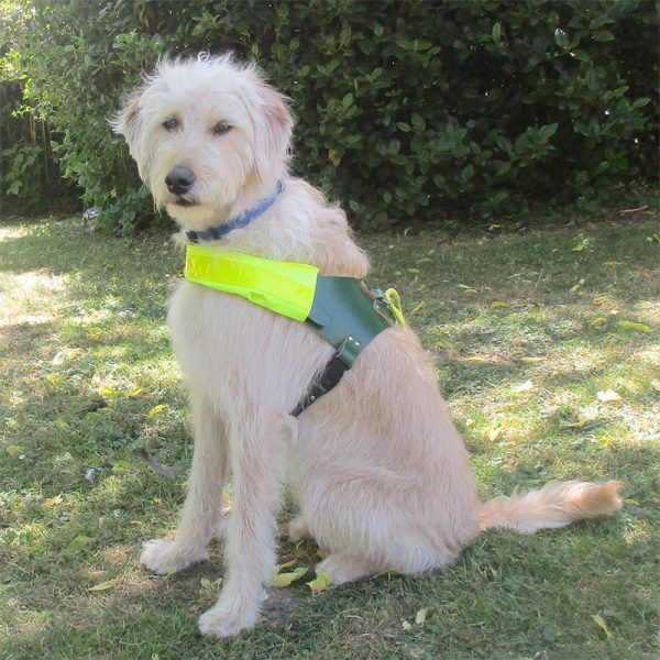 The Seeing Dogs Alliance - Get Involved
