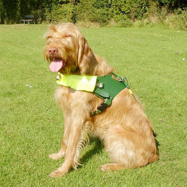 The Seeing Dogs Alliance - Who We Work With